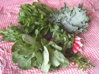 early season CSA veggies, lida farm CSA, pelican rapids CSA